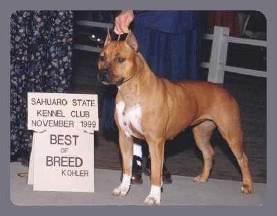 EPICURE AMERICAN STAFFORDSHIRE TERRIERS